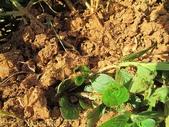 紅火蟻:IMG_2779.jpg