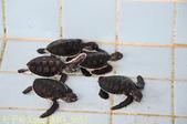 泰國攀牙海龜生態保育中心 20160207:IMG_5653.jpg