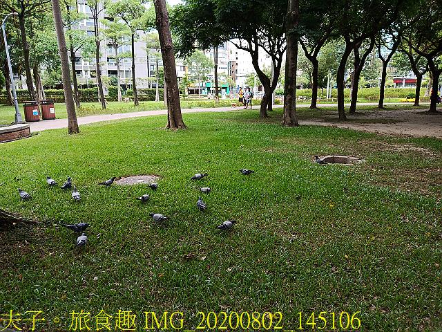 IMG_20200802_145106.jpg - 台北市大安森林公園 20200802
