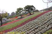 北投社三層崎公園「台版富良野花海」20210203:IMG_4107.jpg