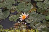 桃園區靜思堂昭和櫻 2017/04/06:IMG_1634 香水蓮花.jpg