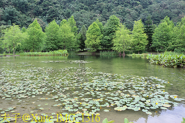 IMG_1316.jpg - 苗栗 南庄雲水度假森林 20190603