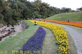 內湖大溝溪生態園區 春節走春看花海 20210131:IMG_3930.jpg