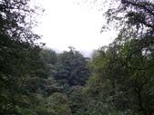 桃園上巴陵拉拉山 (達觀山) 2009/11/26 :P1050600.JPG
