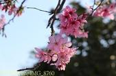 新北市三芝群櫻紛飛漫步行 - 三生步道 20140228 :IMG_8760.jpg