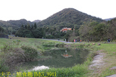 內湖大溝溪生態園區 春節走春看花海 20210131:IMG_3941.jpg