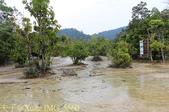 泰國喀比翡翠池 Emerald Pool krabi  20160206:IMG_5560.jpg