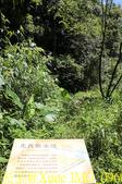 新竹尖石老鷹溪步道  裡埔瀑布 20190823:IMG_0969.jpg