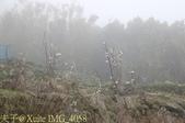 淡水楓樹湖古道木蘭花辛夷 20150225 :IMG_4058.jpg