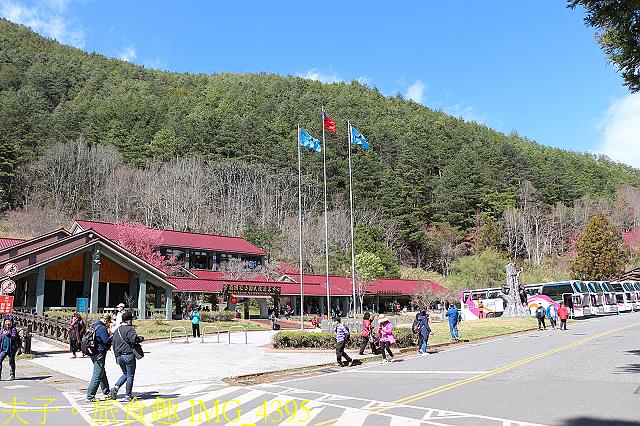 2021年 武陵農場 山櫻花、紅粉佳人 繽紛綻放 20210214:IMG_4395.jpg