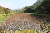 大漢溪山豬湖生態親水園區 20181107:IMG_9079 雲荷池 .jpg