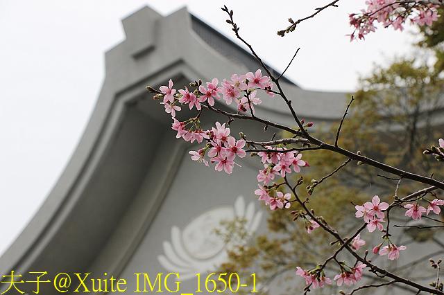 IMG_1650-1.jpg - 桃園區靜思堂昭和櫻 2017/04/06
