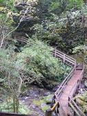 桃園上巴陵拉拉山 (達觀山) 2009/11/26 :P1050576.JPG