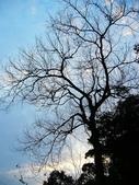 2012/02/20 回暖的傍晚:P1110159.jpg