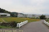 桃園龜山楓樹村黃波斯菊 2013/11/22:IMG_3973.jpg
