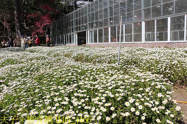 2021年 武陵農場 山櫻花、紅粉佳人 繽紛綻放 20210214:IMG_4466.jpg