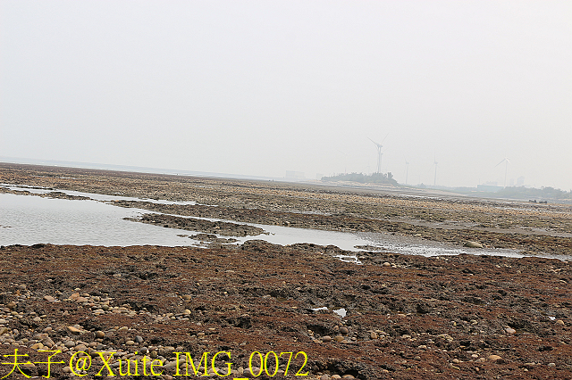 IMG_0072.jpg - 桃園新屋觀新藻礁 2017/04/19