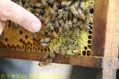 三奇蜜蜂生態農園 20190920:IMG_0213 蜂王.jpg
