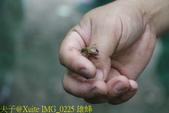 三奇蜜蜂生態農園 20190920:IMG_0225 雄蜂.jpg