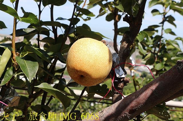 IMG_6068.jpg - 幸福文旦柚農遊體驗之旅 幸福滿滿滿!20200806