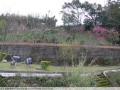 桃園龍潭大平村大平紅橋 and 入口伯公廟 2011/02/18:P1010200.JPG