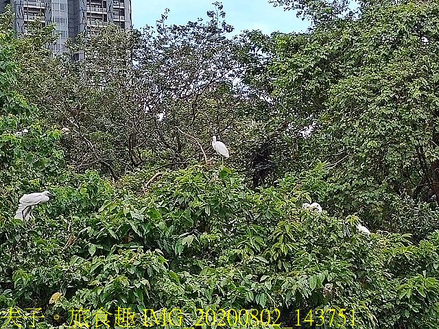 IMG_20200802_143751.jpg - 台北市大安森林公園 20200802
