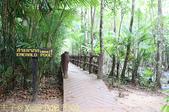 泰國喀比翡翠池 Emerald Pool krabi  20160206:IMG_5502.jpg