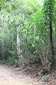泰國喀比翡翠池 Emerald Pool krabi  20160206:IMG_5515.jpg