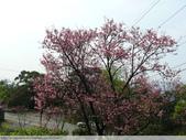 汐止大尖山天秀宮櫻花 2011/03/14:P1010576.JPG