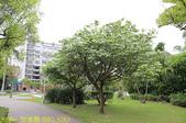 台北市內湖區碧湖公園 20210317:IMG_6383.jpg