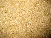 台農秈稻22號:台農22號-北糙.JPG