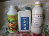 台農秈稻22號:IMG_0042.JPG