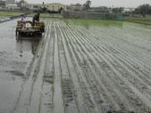台農秈稻22號:DSC03209.JPG