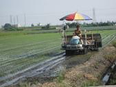 台農秈稻22號:IMG-_03.JPG