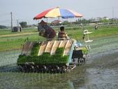 台農秈稻22號:IMG-_09.JPG