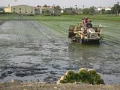 101年2期水稻:插秧中3.JPG