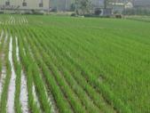 有機益菌分解稻草:IMG_0142