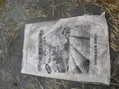 有機益菌分解稻草:IMG_0052.JPG