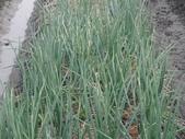 小菜園:DSC00952.JPG