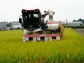 台農秈稻22號:DSC04639.JPG