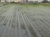 台農秈稻22號:DSC03214.JPG