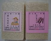 101年1期水稻:2.jpg