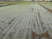 台農秈稻22號:103.3.5台農秈22號插秧完成..JPG