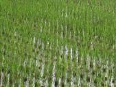 有機益菌分解稻草:IMG_0143