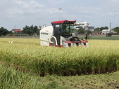 103年1期水稻日記:收割中1.JPG
