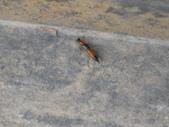 花胡瓜:蟲蟲危機.JPG