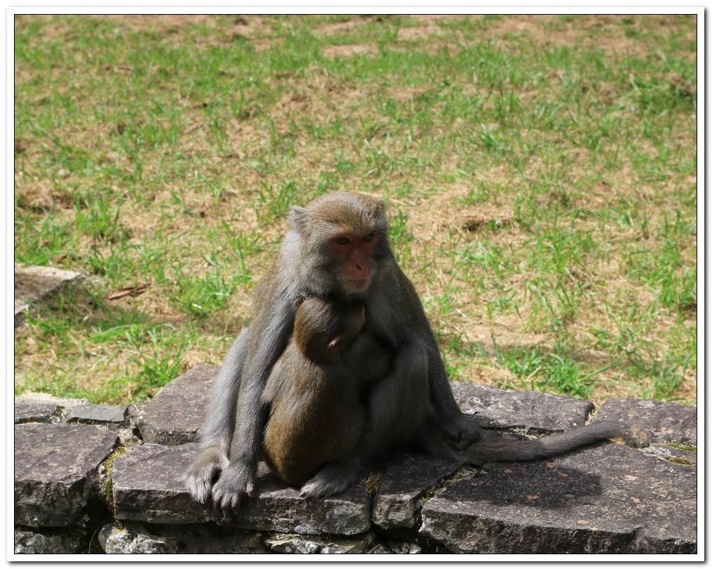 小獼猴:麟趾山00005.JPG