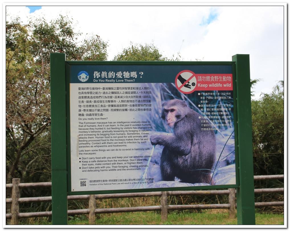 小獼猴:麟趾山00012.JPG