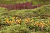 Vik-Skaftafell National Park-Jokulsarlon-Reykjavik:這草甸絨絨的、很有彈性喔!