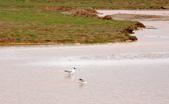 黃河源(扎陵湖、鄂陵湖、牛頭碑):1885173602.jpg